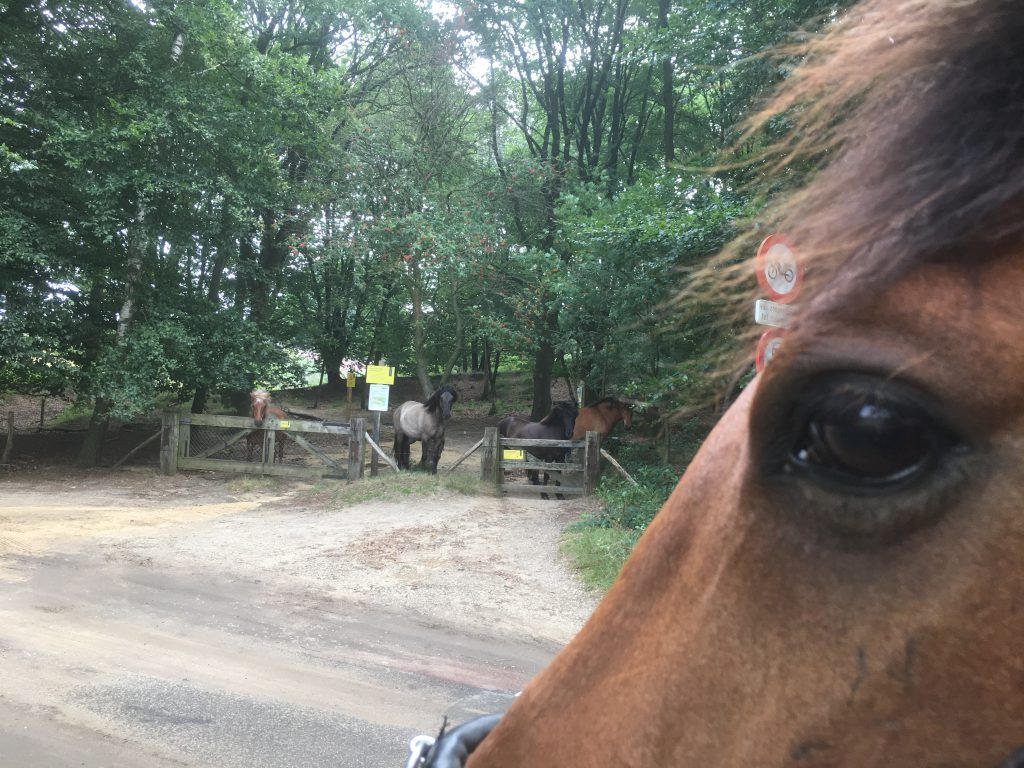 wild horses at the gate