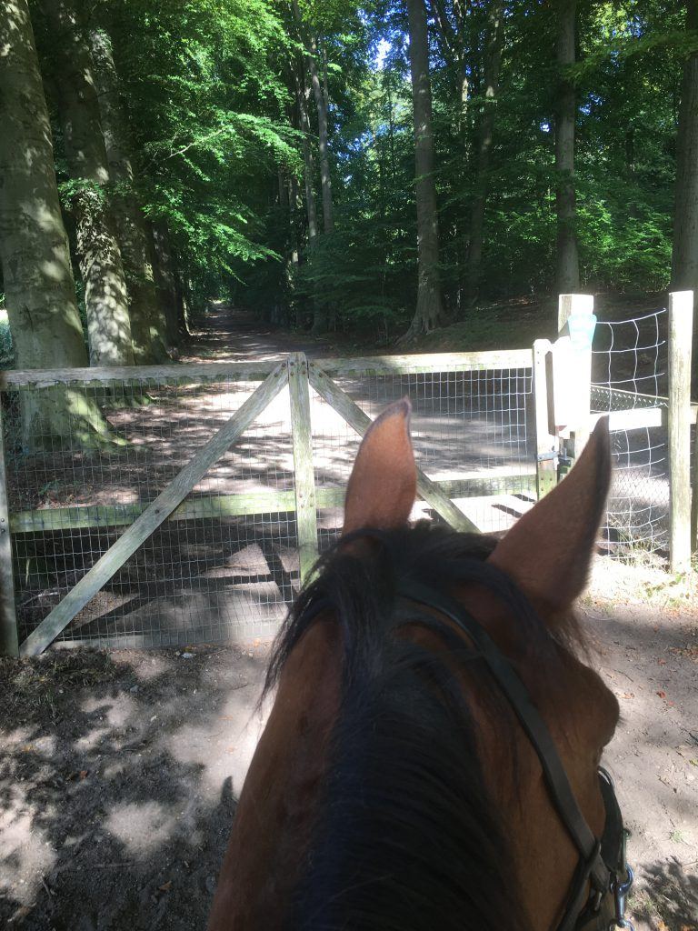opening gate without dismounting